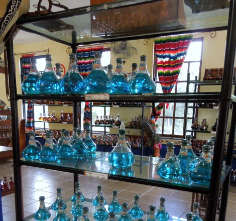 Blue-agave-tequila-Mexico