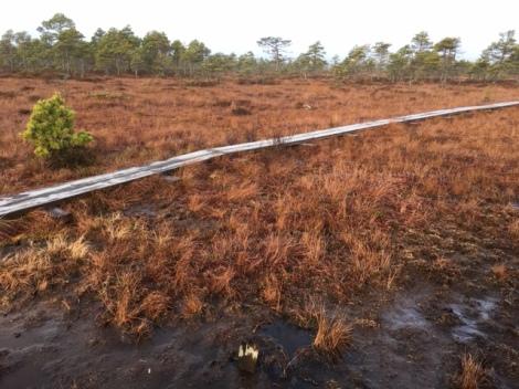 Boardwalk through the bogs