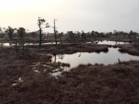 Bog Hike Estonia