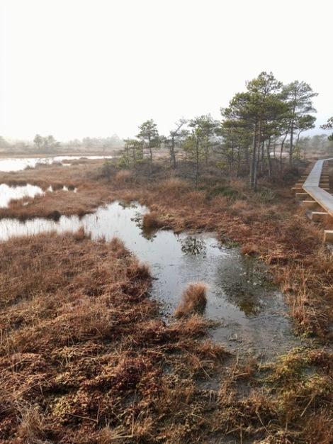Bog lakes