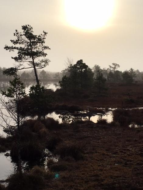 Fog burning off the bogs