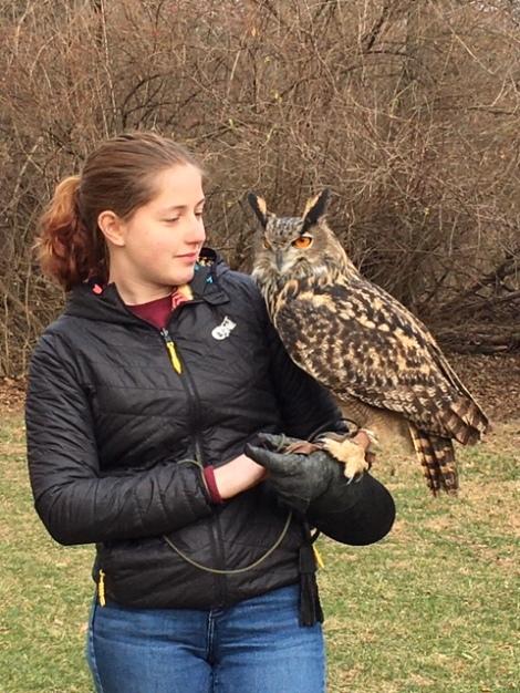 Ohio School of Falconry Henson Owl