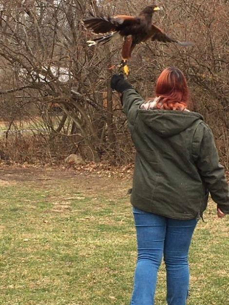 Walks with Hawks Falconry